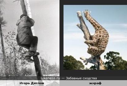 На перевале Дятлов испугался жирафа, а жираф испугался Дятлова.