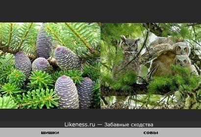 Флора и фауна.