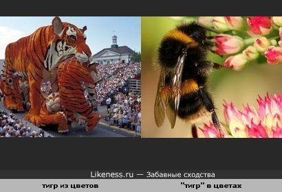 Глядя на цветочную скульптуру тига, вспоминается тигр поменьше...
