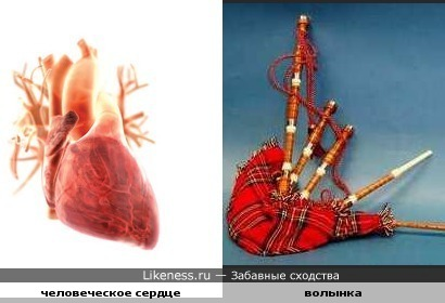 Волынка напоминает сердце.