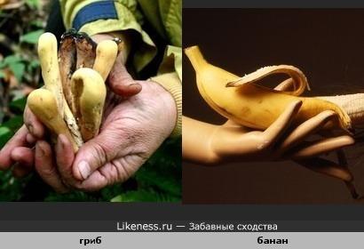 Гриб похож на банан