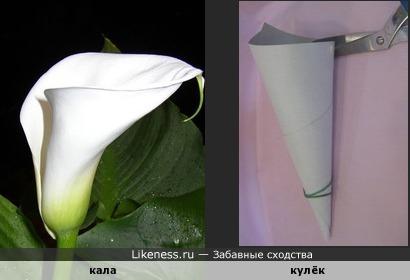 Цветок калы похож на бумажный кулёк.