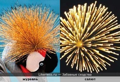 У венценосного журавля в голове всегда одни праздники.