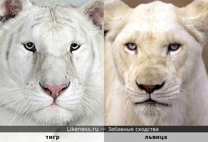 Не давайте животным гидроперит в лапы, а то они все перепутаются, вон в Новосибирске уже лигров выращивают (тигры+львы)
