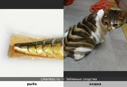 Кошкозавр