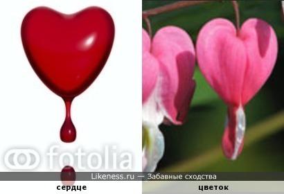 Кровоточащее сердце