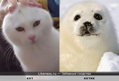 Кот и котик.