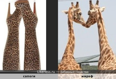 Леопард похож на жирафа.