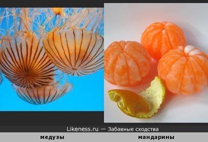 Мы весёлые медузы, не похожи на арбузы...