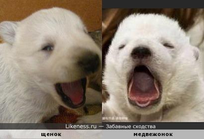 Мой щенок породы двортерьер ужасно похож на медвежонка. Скажите, как его зовут?