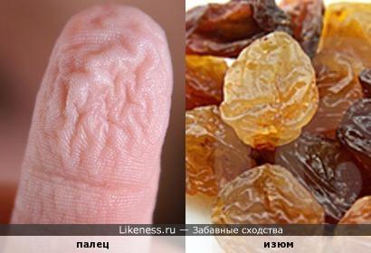 Если долго купаться, то пальцы становятся похожи на изюм.