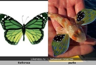 Рыбка похожа на бабочку