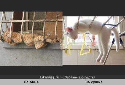 Людей с людьми сравниваем, почему бы кошек не сравнить с кошками?