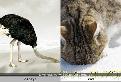 Сибирский страус, эволюция.