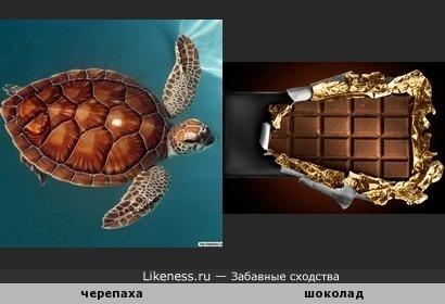 Шоколадная черепашка