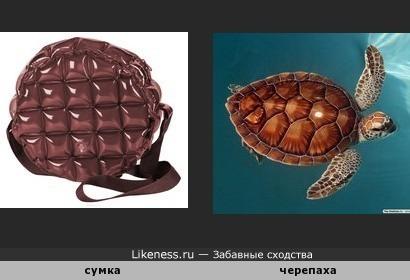 Шоколадная сумка похожа на черепашку
