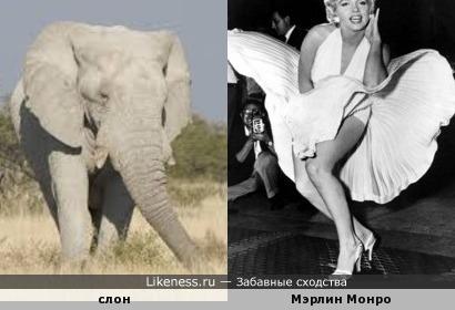 Мэрлин Монро изображает слона.