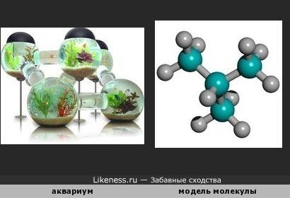 Аквариум похож на модель молекулы