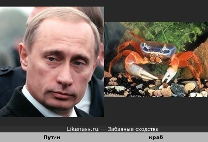 Путин-краб)))