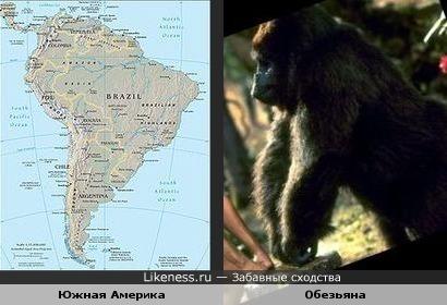 Южная Америка - Обезьяна