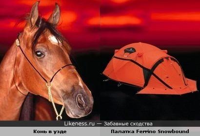 Палатка похожа на морду лошади в узде