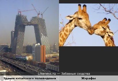 Здание Центрального китайского телевидения (CCTV) во время строительства похоже на целующихся зверей