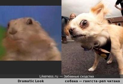 Драматический взгляд суслика и собаки
