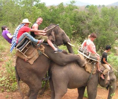 Слоны спариваются с туристами-наездниками