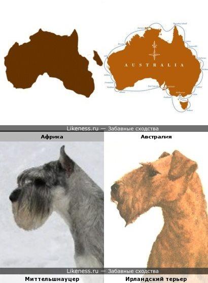 Континенты похожи на породы собак