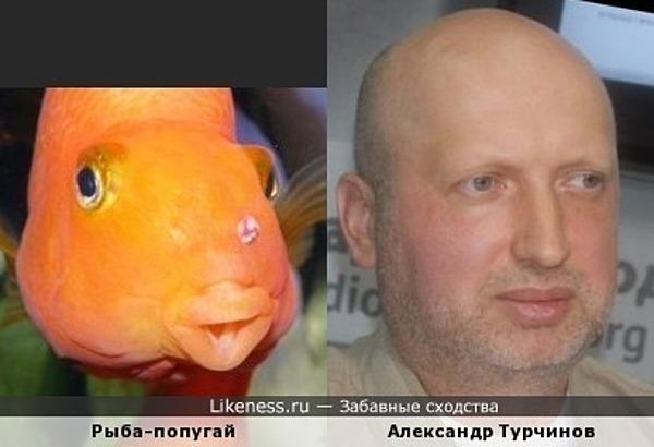 Александр Турчинов похож на рыбу-попугая