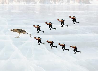 На зиму конькобежцы ускользают в теплые края.