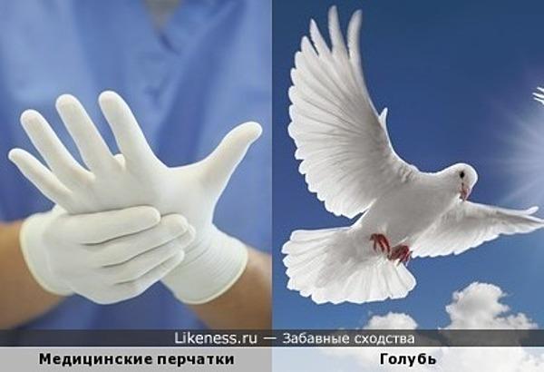 Медицинские перчатки похожи на голубя