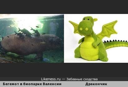 Бегемот с рыбами-приставучками похож на толстого дракона