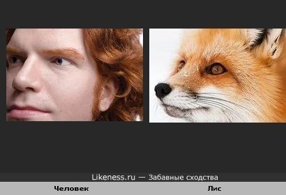 Человек похож на лиса