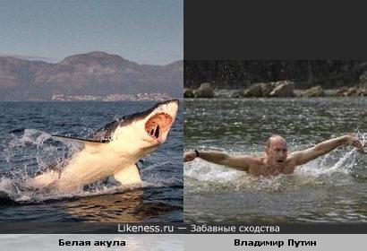 Белая акула и белый человек