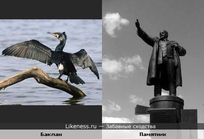 Баклан пытается изобразить памятник Ленину у Финляндского вокзала