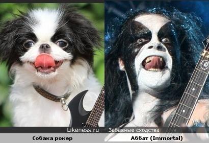 Собака похожа на Аббата