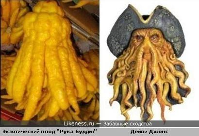 """Экзотический плод """"Рука Будды"""" и Дейви Джонс"""