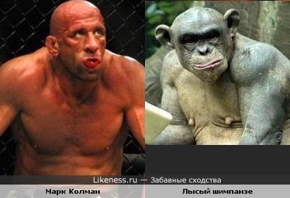 Марк Колман и Лысый шимпанзе