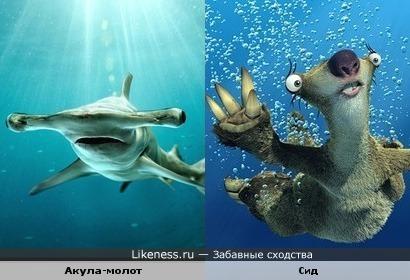 Акула-молот и ленивец Сид