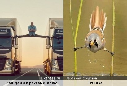Жан-Клод Ван Дамм в рекламе Volvo и птичка