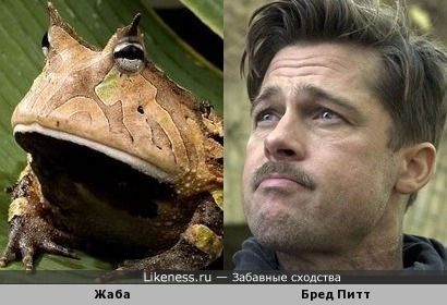 Жаба и Бред Питт