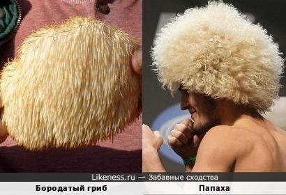 Бородатый гриб и Папаха