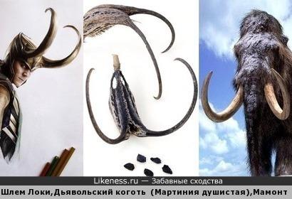 Шлем Локи, Дьявольский коготь(Мартиния душистая),Мамонт