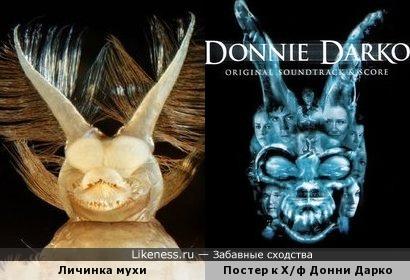 Водная личинка ибисовой мухи и Постер к Х/ф Донни Дарко
