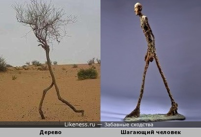 """Дерево и скульптура Альберто Джакометти """"Шагающий человек"""""""
