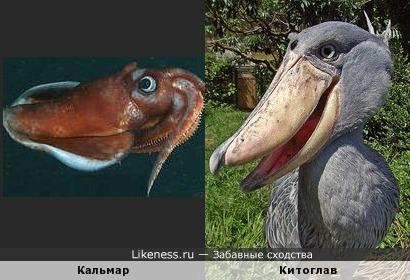 Кальмар и Китоглав