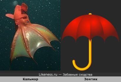 Кальмар напомнил Зонтик