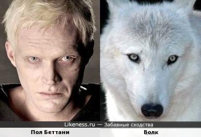 Пол Беттани и волк