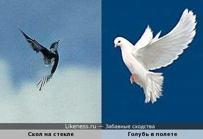 Скол на стекле и голубь в полете